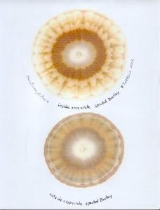 Barley chromagraph 2002