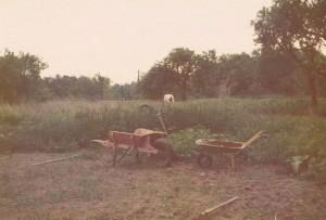 Orton garden 1975